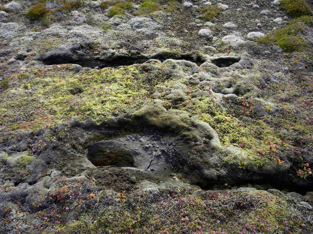 Annekatrin Doell Landschaft Island Flora