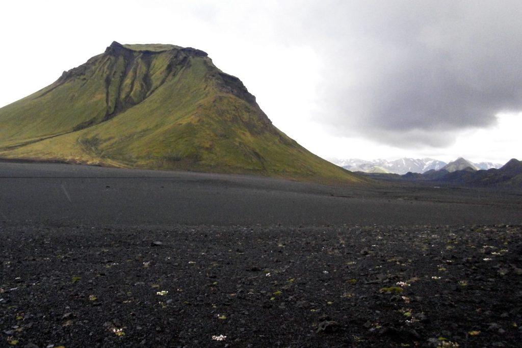Island Hochland Grasnelke Annekatrin Döll