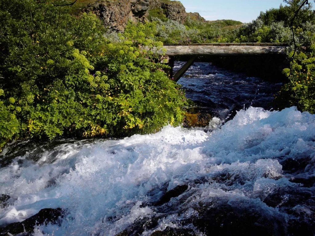 Island Vegetation Erz-Engelwurz